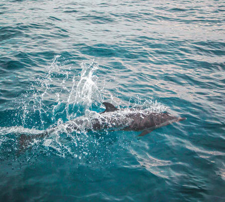 Backwater Dolphin Spotting Charter Boat Tour