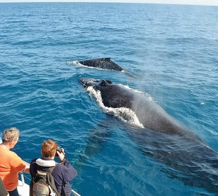 Whale and Dolphin Watching in the South Coast of Sri Lanka