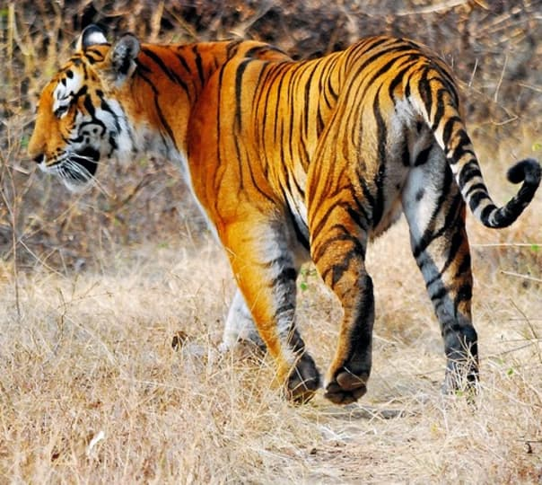 Bandhavgarh Wildlife and Tiger Trail