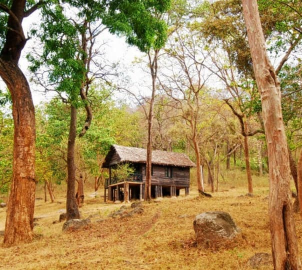 Overnight Stay at K Gudi Wilderness Camp near Mysore