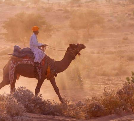 Camel Safari at Samsara in Rajasthan