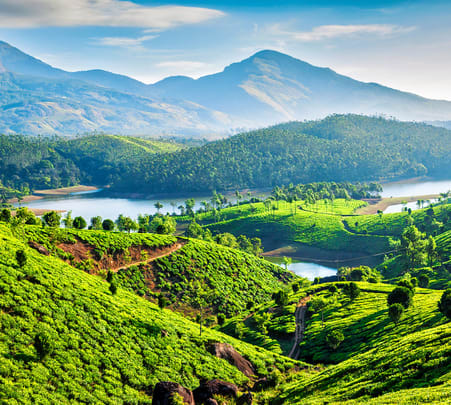 Munnar Sightseeing Package from Kochi