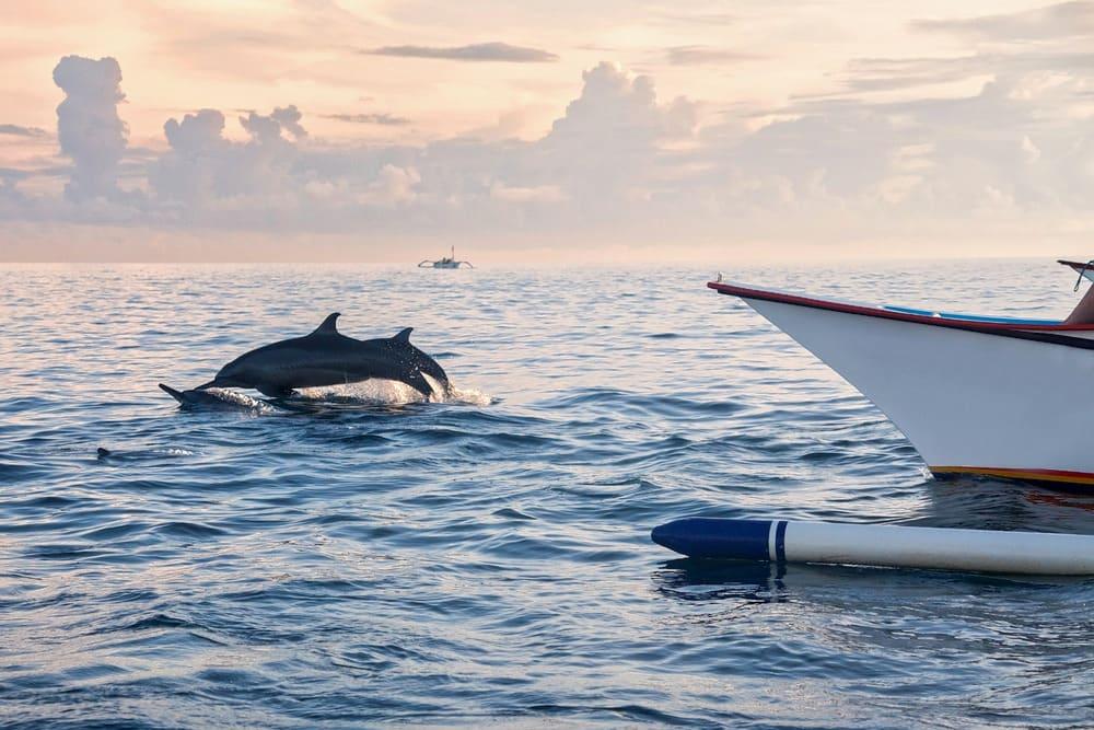 Spot the Dolphins in Lovina