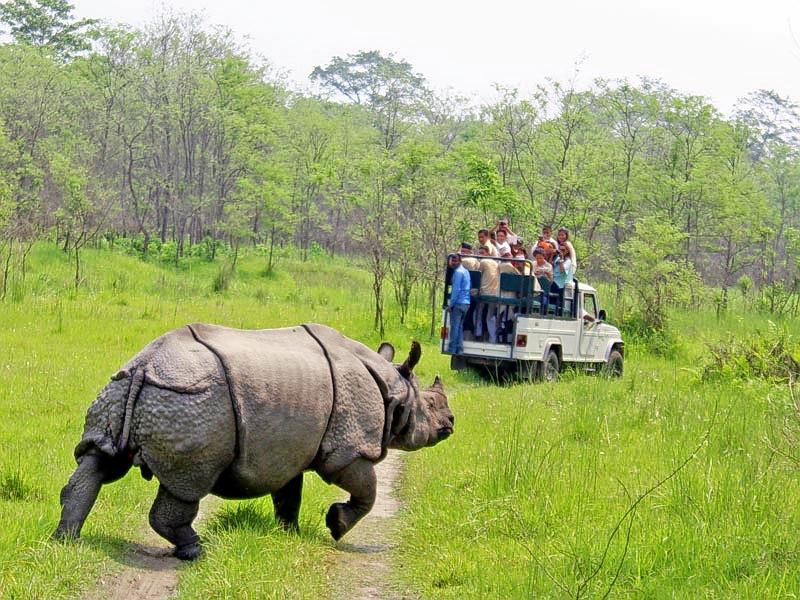 1559045370_one-horn-rhino.jpg
