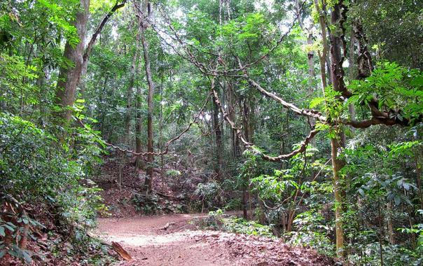 Udawattakele_forest_h.jpg