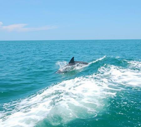 Dolphin Rides at Payyambalam beach, Kannur