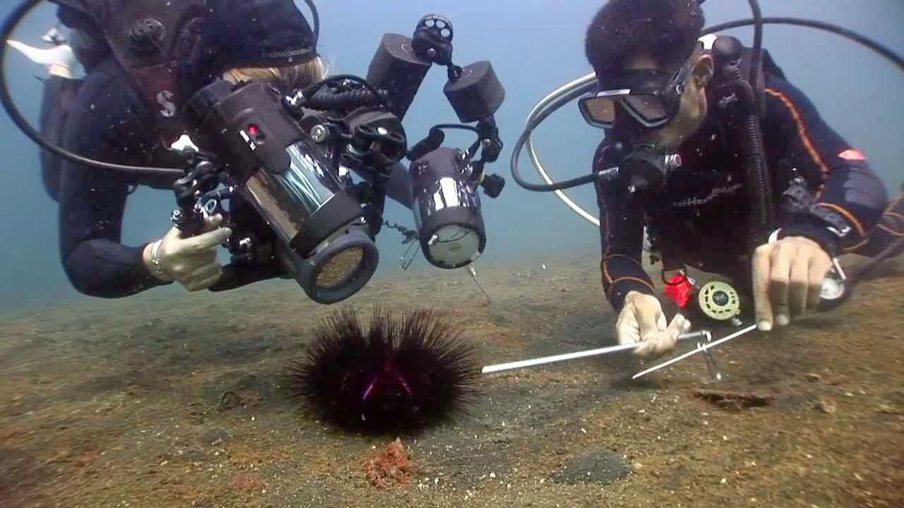 Muck Diving at Padang Bai