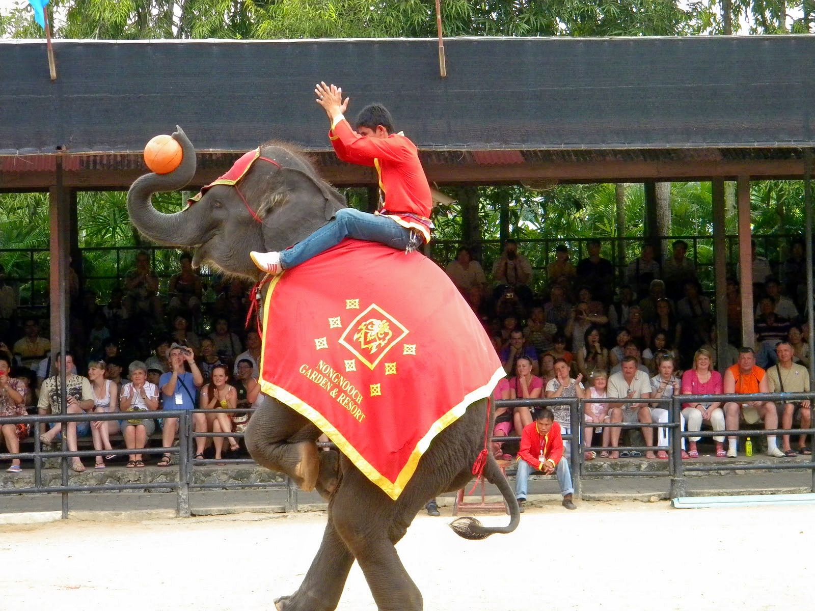 1464867217_elephant.jpg