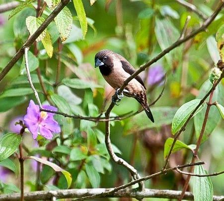 Birding Kerala Tour