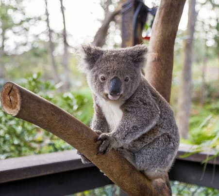 Wild Life Sydney Zoo Tickets Flat 20% off