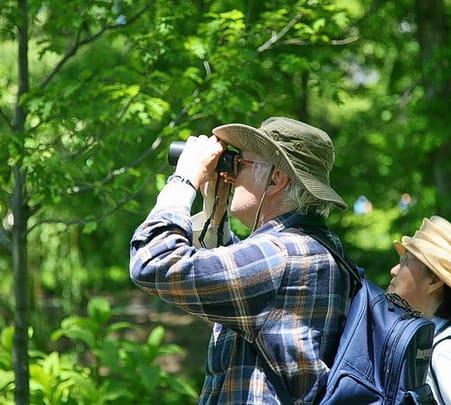 Birdwatching at Langkawi in Malyasia
