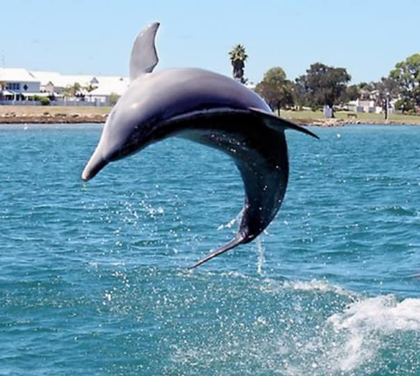 Dolphin Tour in Australian Coast