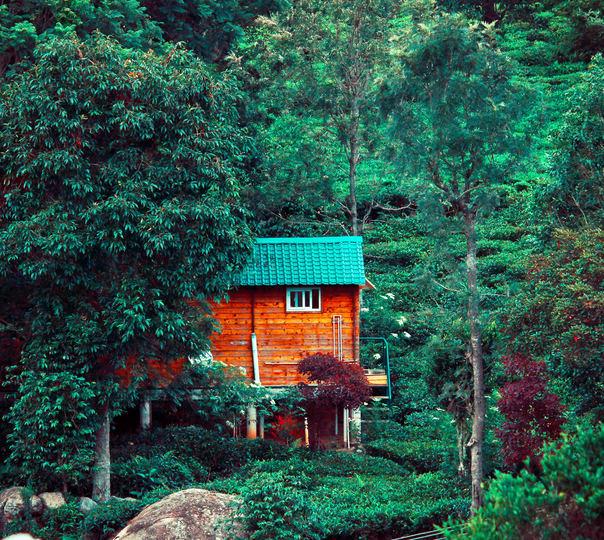 Tea Estate Cottage Stay in Kotagiri