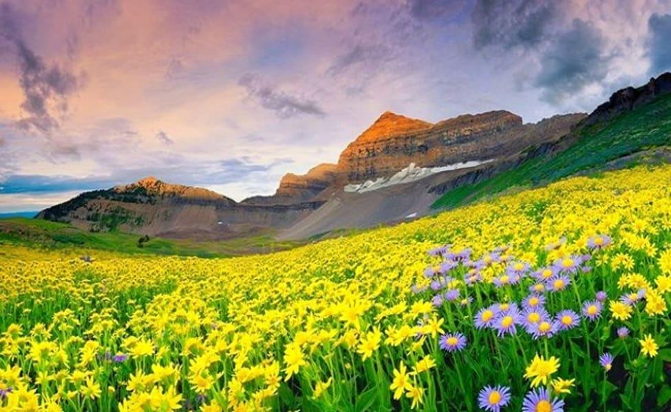 6 Days 5 Nights Trek To Valley Of Flowers Uttarakhand 2021