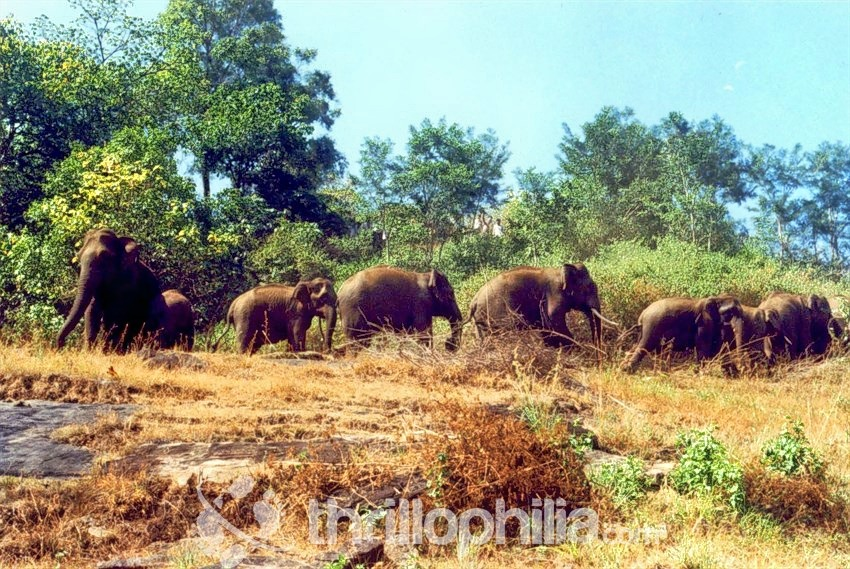 Elephants-in-action-chinnar-national-park.jpg