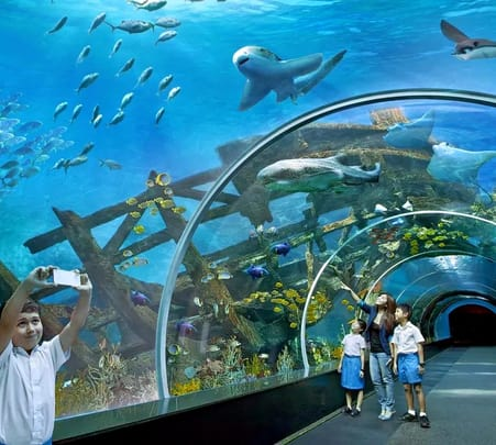 S.e.a. Aquarium Singapore Ticket - Flat 25% off