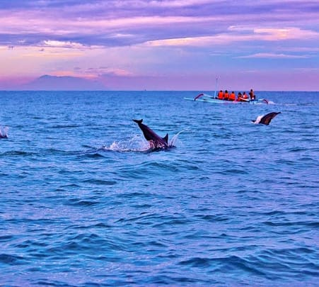 Bali Lovina Dolphin Watching and Sightseeing Tour