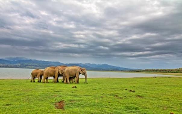 M_corbett_national_park-roshan_panjwani.jpg
