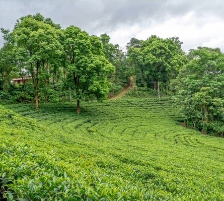 Wayanad Tea Processing and Tasting Experience - Flat 30% Off