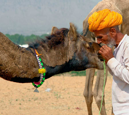 Camel Breeding Farm Tour in Rajasthan