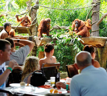 Singapore Zoo: Jungle Breakfast with Wildlife