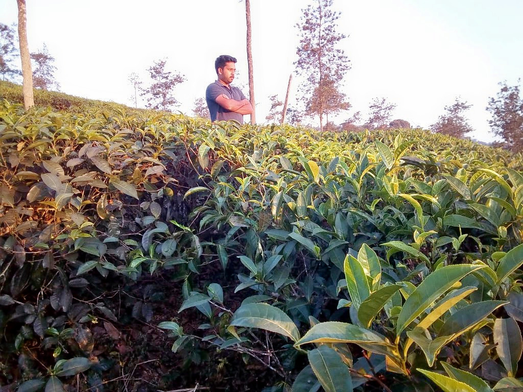 1586245718_tea-tours-ripon-heritage_(5).jpg