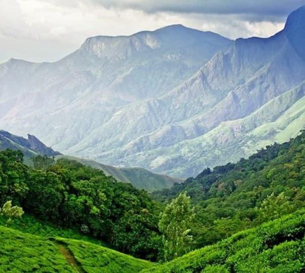 Tea Garden and Lagoon Trip, Kerala