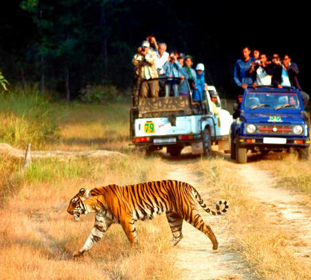 Jeep Safari in Jim Corbett Flat 10% off