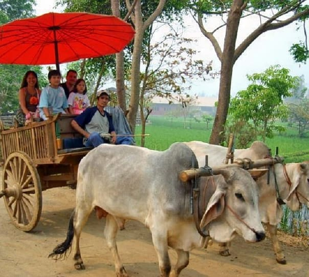 Elephant Camp Tour and Ox Cart Ride in Chiang Mai