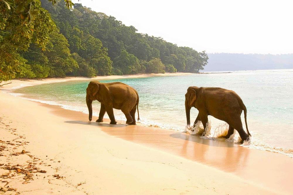 1502974020_andaman_honeymoon_elephants.jpg