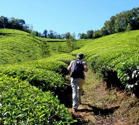 Guided Morning Walk, Munnar