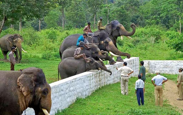 Dubare-elephant-camp-coorg-entry-fee-timings-holidays-reviews-header.jpg