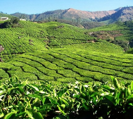 South Kerala Spice Plantation Tour