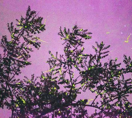 Night Trek to Kothaligad