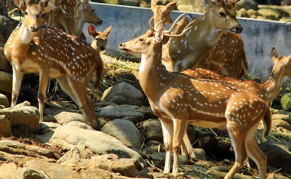 Deer Park Dehradun Tickets   Book Online & Save 18%