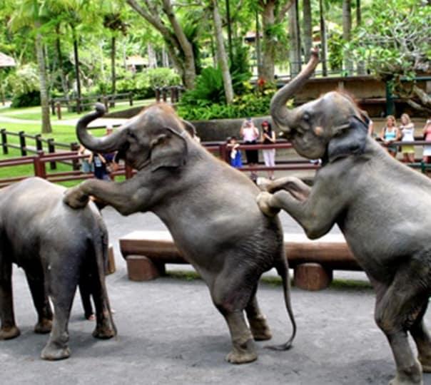 Visit to an Elephant Safari Park in Ubud