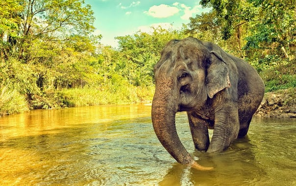Wild-life.jpg
