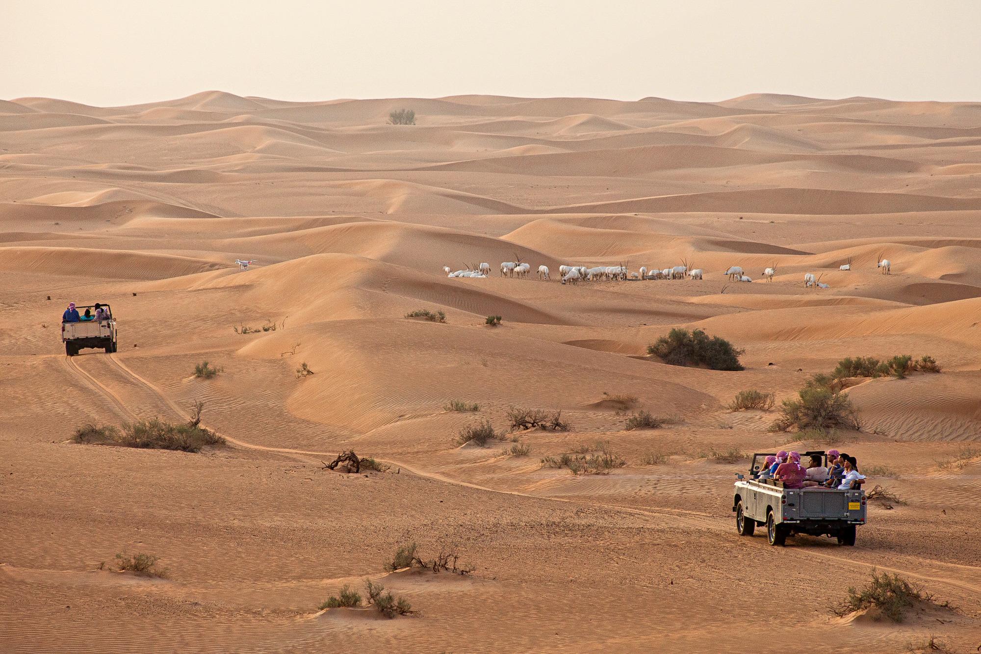 1580913361_desert_safari_and_oryx.jpg