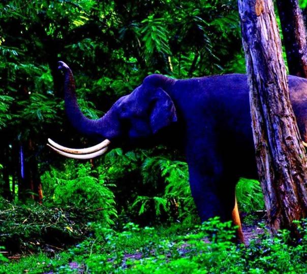 Wild Kerala Adventure