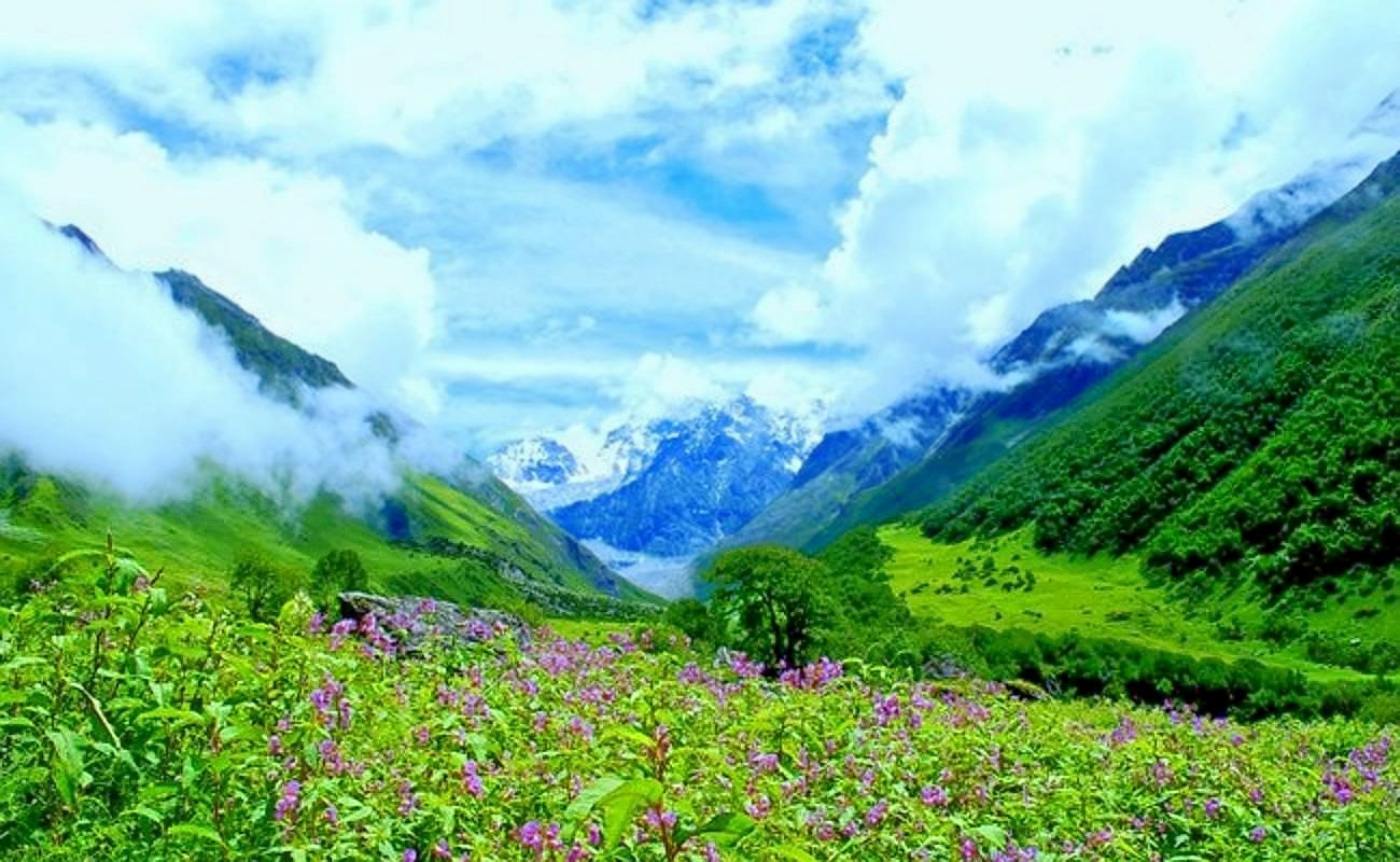 1493912500_1481968159valley_of_flowers_7.jpg.jpg