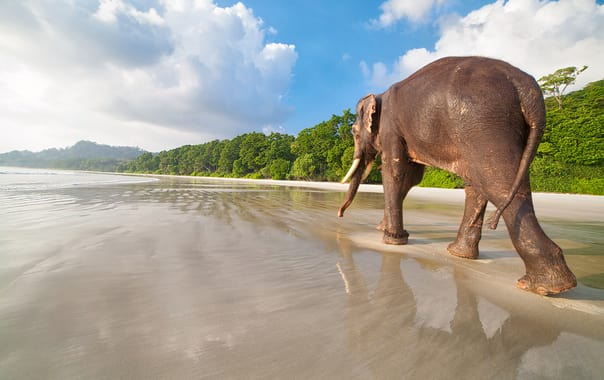 1537009421_elephant_island_andaman.jpg