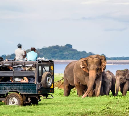 Udawalawe National Park Safari - Flat 20% off