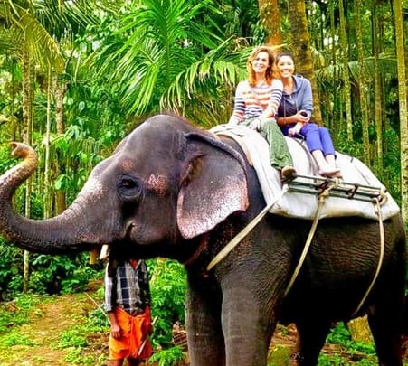 Elephant Ride through Plantation in Thekaddy