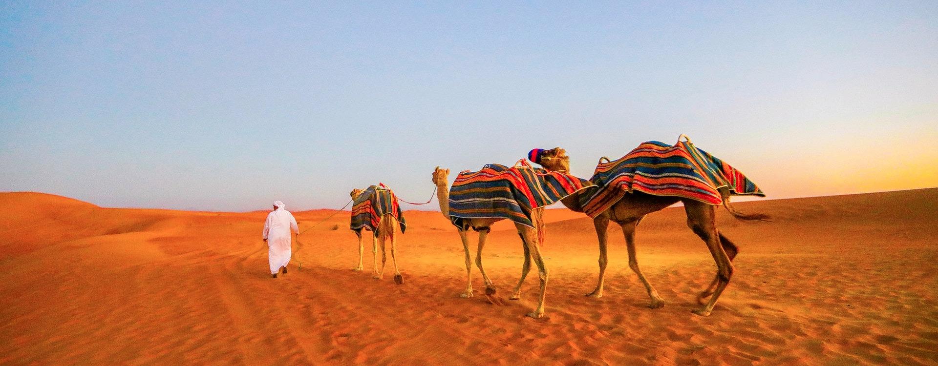 1511268180_4af07bf0-d543-4944-b990-28186479421b-1906-dubai-morning-camel-safari-01.jpg