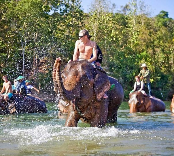 Half Day Elephant Safari in Luang Prabang