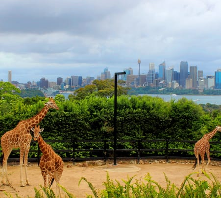 Sydney Taronga Zoo Express Combo Flat 20% off