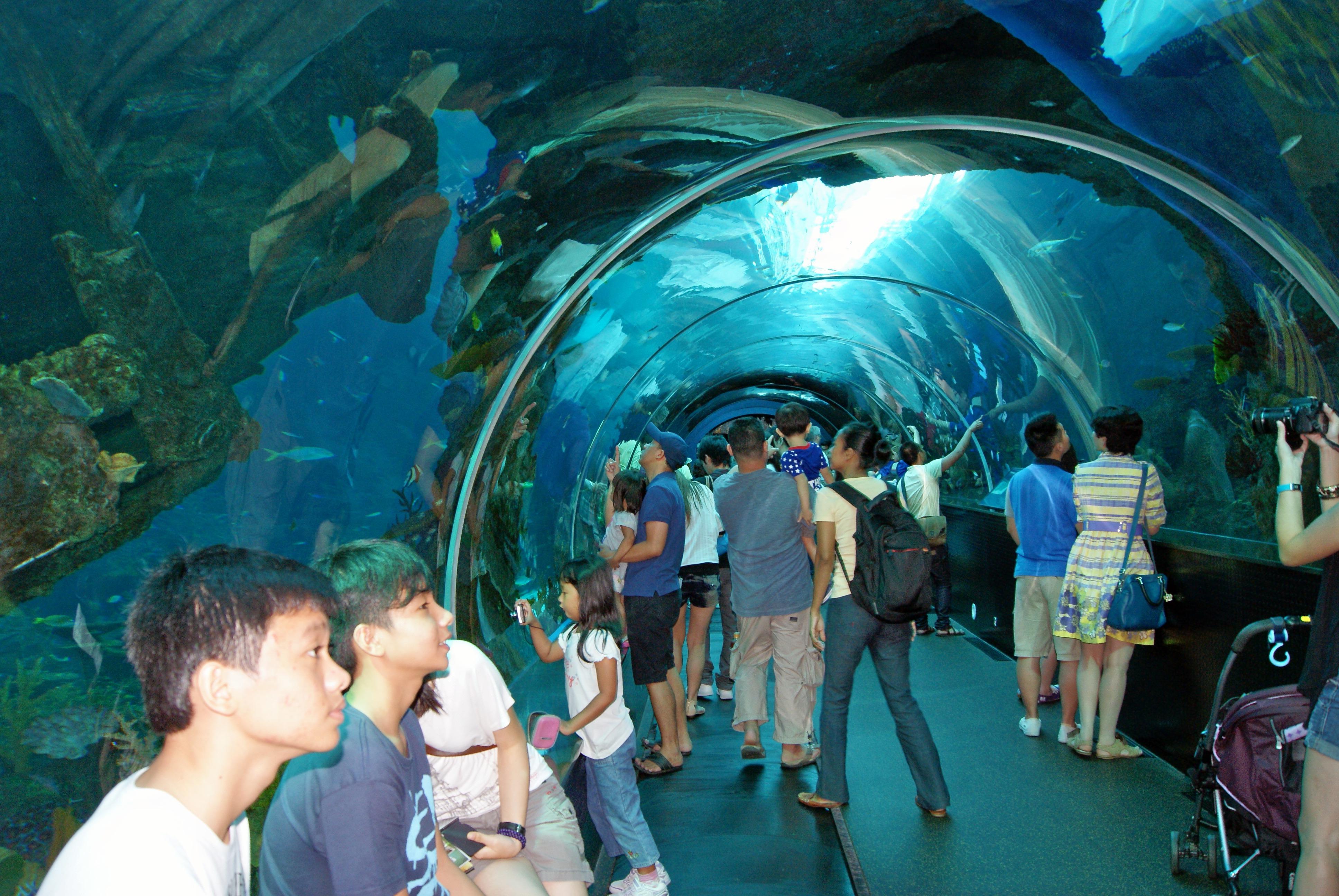 1465794075_s.e.a._aquarium__marine_life_park__resorts_world_sentosa__singapore_-_20130105-02.jpg