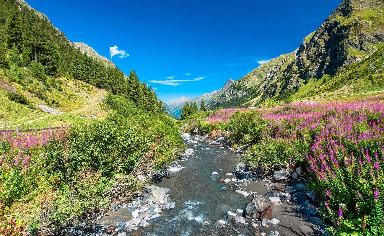 East Coast Auto >> Valley Of Flowers Trek, Uttarakhand 2018 | Thrillophilia