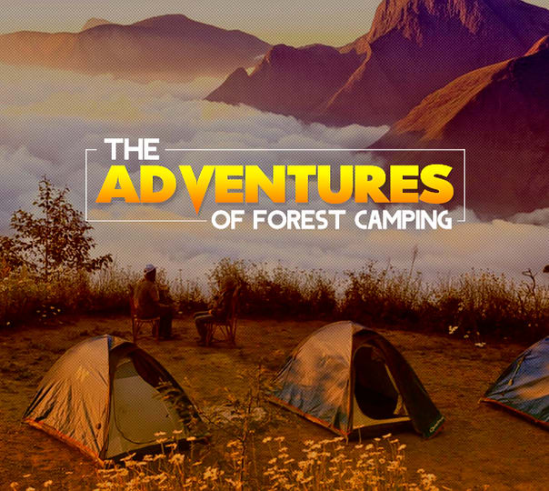 Trek To Chokramudi And Forest Camping In Munnar