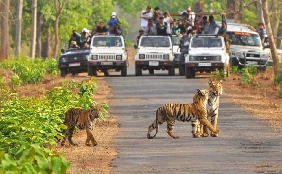 Tadoba Andhari Tiger Safari With Stay, Chandrapur